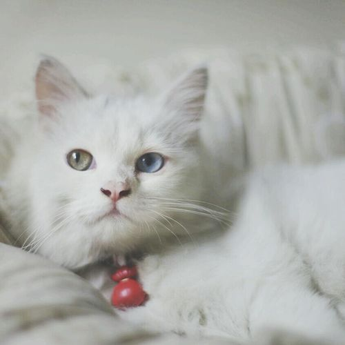 Cats White Hanging Out Petstagram