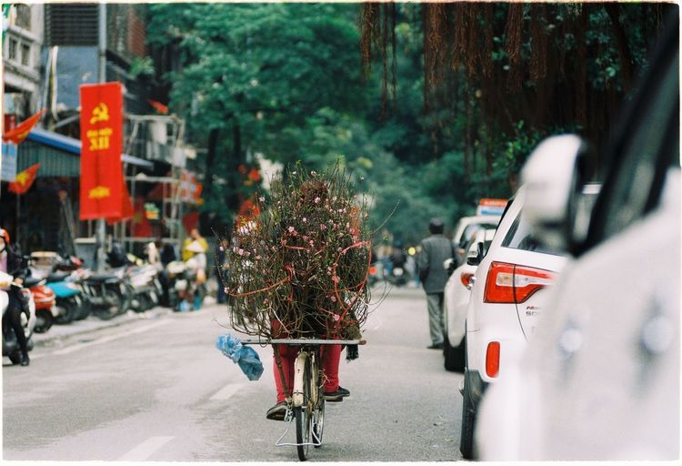Person Carrying Plants On Bicycle