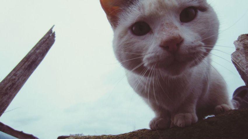 Cat Cat♡ Cat Lovers Cat Watching