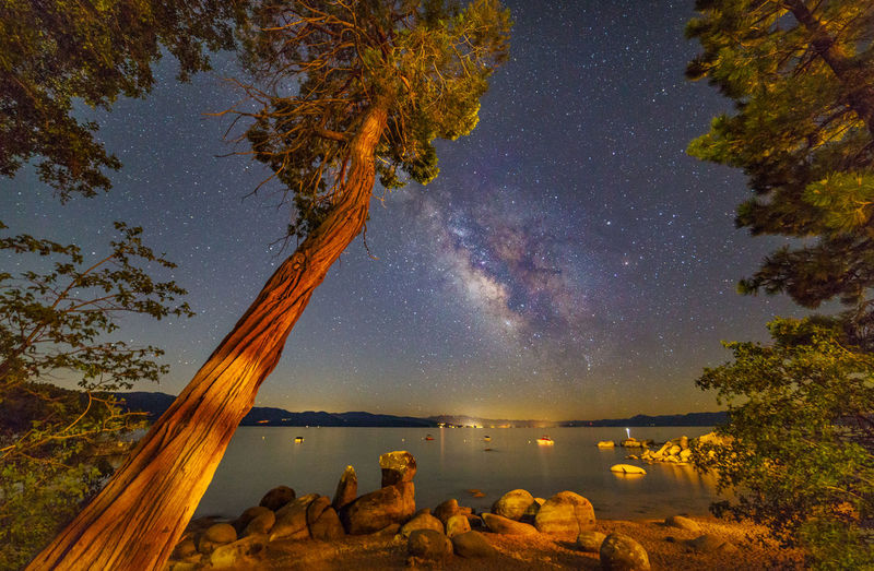 Trees at speedboat beach against milky way at night
