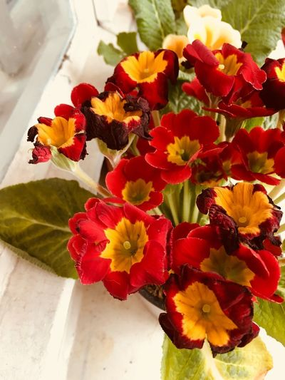 Red flowers Flower Freshness Petal Flower Head Fragility Nature No People Beauty In Nature Plant Leaf Day Close-up Indoors  Multi Colored Growth Springtime