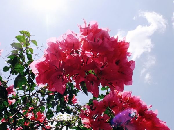 Flower Growth Beauty In Nature Nature Fragility Petal Freshness