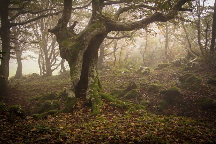 Autumn wood with fog in the park of Monte Cucco, Umbria Autumn Landscape_Collection Mystic Nature Ambient Apennines Beauty In Nature Beech Enchanted  Environment Fog Foliage Land Landscape Monte Cucco Myself Mystery Nature Non-urban Scene Rainforest Scenics - Nature Tranquil Scene Tree Trunk Umbria WoodLand