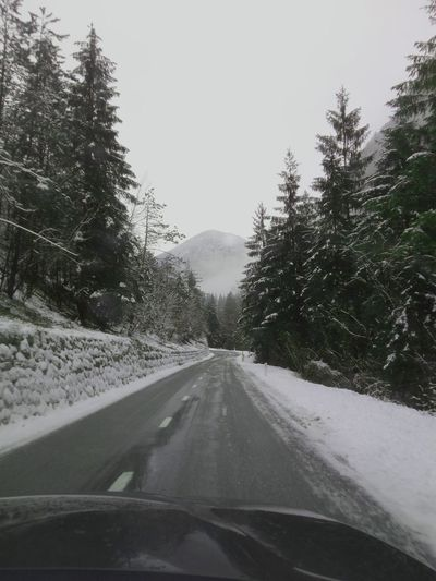 Car Transportation Road Car Interior Windshield Car Point Of View Tree Road Trip Land Vehicle Travel No People Winter Nature Snow Day The Way Forward Mode Of Transport Cold Temperature