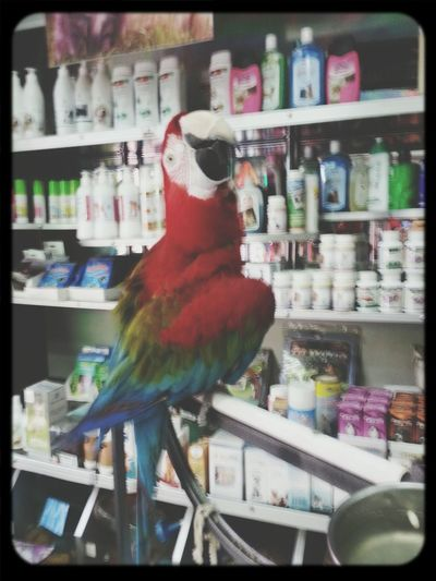 Check This Out Turkish Bazaar Colorful Parrot Australian Parrot