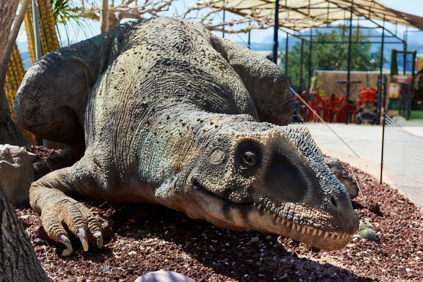 Algar, Spain - April 8, 2017: Realistic model of a dinosaur in the Dino Park of Algar. It is a unique entertainment and educational park. Spain älgar Alicante, Spain Dino DinoPark Dinosaur SPAIN Statue Amusement Park Animal Themes Close-up Day Dino Park Editorial  Entertainment Park Mammal No People One Animal Outdoors Paleontology Predator Realistic Sculpture Sunny Day