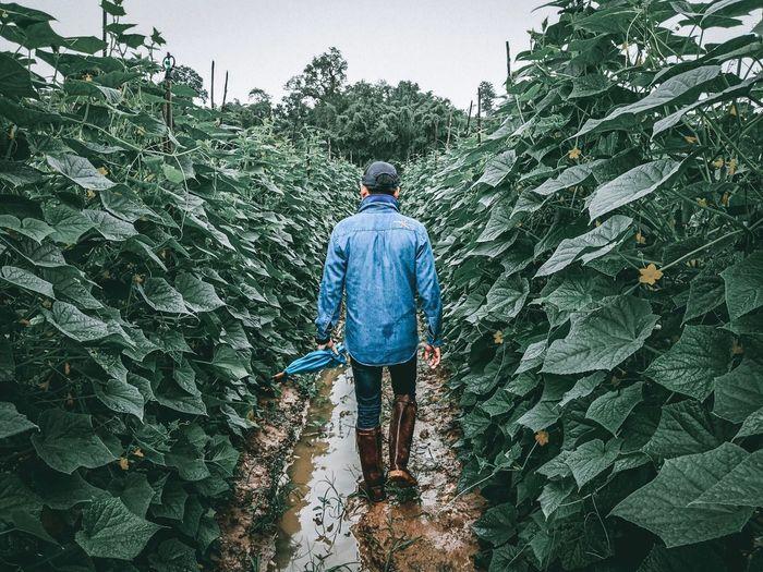 Rear view of man walking on farm