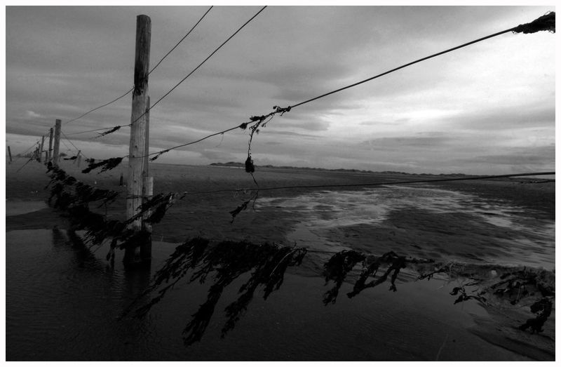 Cable Water Outdoors Reflection Cloud - Sky Nature Tranquil Scene Sea No People Fences Fence Post Sand Fife Black And White coast Tentsmuir Forest walks Fresh On Eyeem