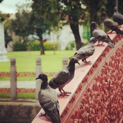 Line-up pigeon on a pink bridge