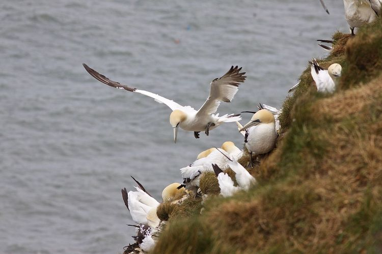 Seagulls flying over sea shore