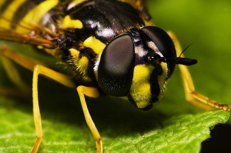Bug Bug Photography Insect Macro Macro Insects Macro Nature Macro Photography Macro_collection Macrophotography