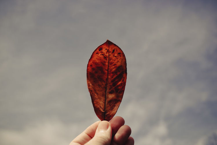 Close-up of hand holding leaf against sky