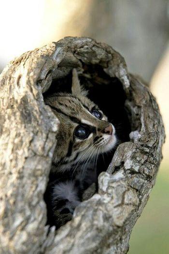 Amazing_captures Awsomenature Awesome_shots Beautiful Nature Best View Cat♡ Cat Lovers