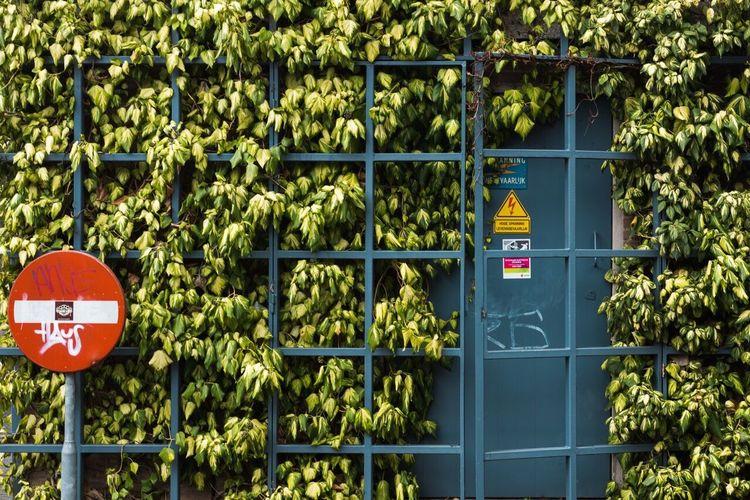 Plants growing on metallic gate