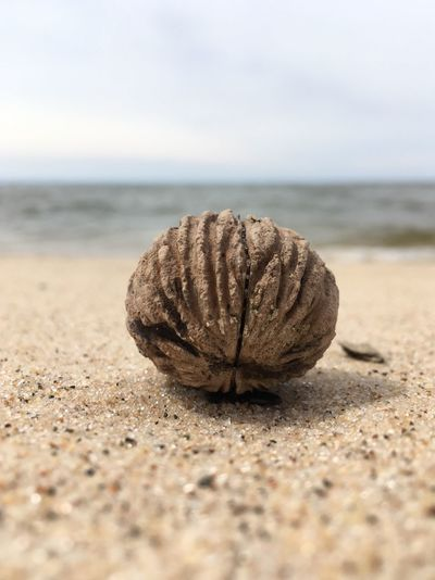 Close-up of nut at beach against sky