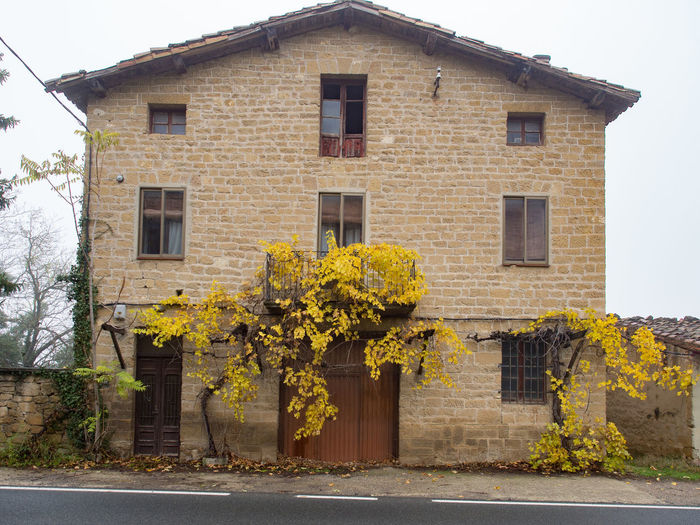 Yellow flowering tree by house against building