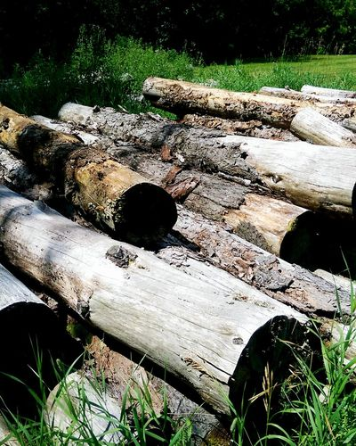 Canadian Logs Country Living Colourful Nature Outdoors Logcanada Quebec Country log pile