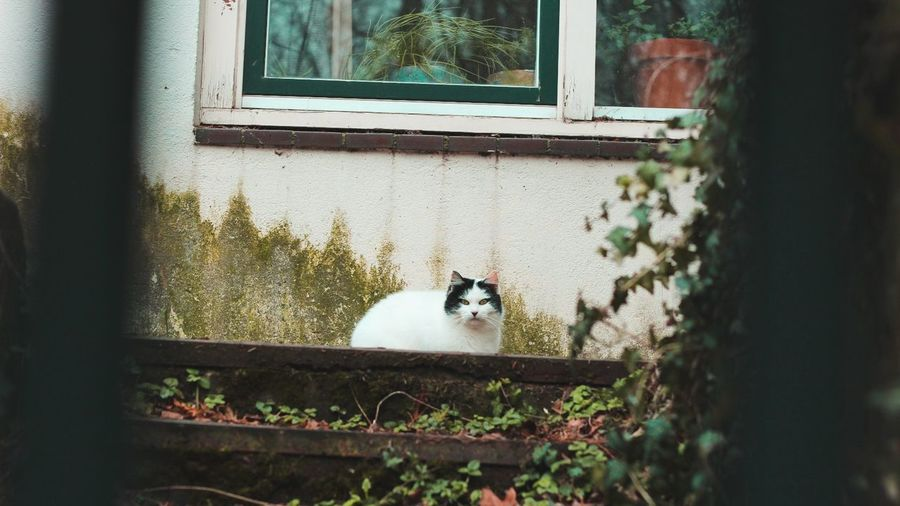 Cat Cyaan Blue Green Plants Reflection White Outdoors Beauty Summer Built Structure Rear View Nature Looking At Camera Front View Day The Great Outdoors - 2017 EyeEm Awards