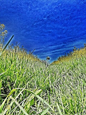 Taking Photos TheyWantEFX EyeEm Nature Lover Hdr Edit Eyem Stoned