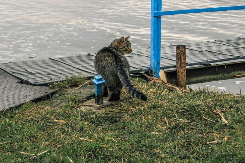 Usedom Animal Themes Animal Wildlife Beauty In Nature Bridge Cat Day Grass Mammal Nature No People One Animal Outdoors Perching Railing Water