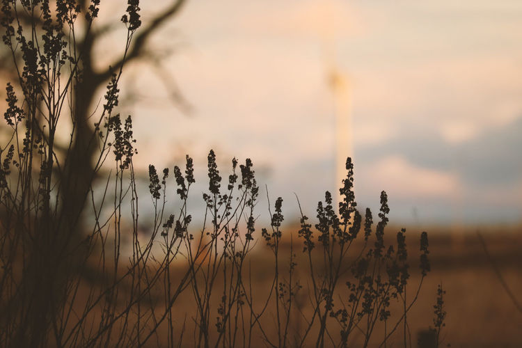 Almost Dark Beauty In Nature Before Sunset Bookeh Close-up Eye4photography  EyeEm Best Shots EyeEm Gallery EyeEm Nature Lover EyeEmBestPics Field Focus On Foreground Moody Nature Nature Collection Nature Photography Outdoors Plant Scenics Sky Sunset Timothy Grass Tranquility Urban Windmill