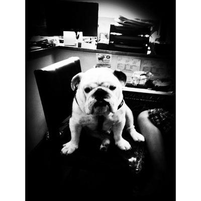 Who Let The Dog Out? Igersoftheday Ig_fotogramers Canine Ig_northamerica Bw_shotz Mogcomm Blackandwhite Igersusa Dog Mytravelgram Monochrome Igworldclub Bw Vt Iphoneonly Insta_america Bulldog 802 Iphonesia Miltonvt Vermont Igharjit Igersvt Igvermont Shotaward Momentsinthesun Hitamputih World_shotz Hot_shotz Allshots_