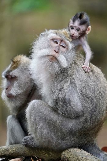 Baby Family Moustache Animal Family Animal Wildlife Animals In The Wild Care Day Focus On Foreground Group Of Animals Mammal Monkey No People Outdoors Primate Sitting Togetherness Two Animals Young Animal The Great Outdoors - 2018 EyeEm Awards The Traveler - 2018 EyeEm Awards The Portraitist - 2018 EyeEm Awards #NotYourCliche Love Letter