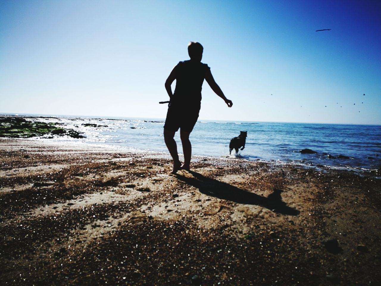 sea, beach, horizon over water, water, full length, nature, shore, silhouette, sky, sand, wave, real people, outdoors, beauty in nature, men, leisure activity, scenics, sunlight, one animal, vacations, day, tranquil scene, one person, pets, standing, tranquility, lifestyles, clear sky, mammal, people