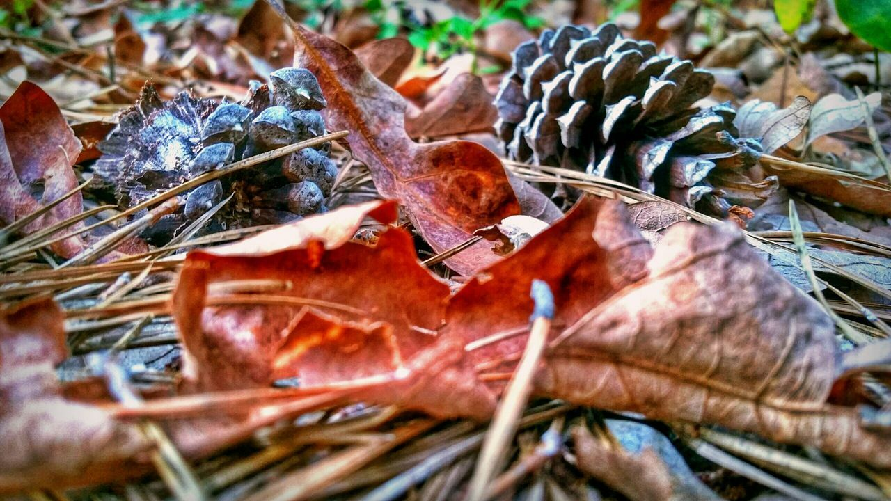 leaf, dry, twig, nature, change, close-up, day, no people, selective focus, outdoors, autumn, plant, beauty in nature, fragility, branch
