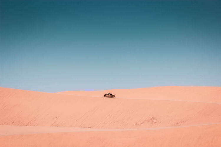 The hump of the dromedary Desert Sand Climate Sand Dune Arid Climate Landscape Sky Environment Land Scenics - Nature Copy Space Clear Sky Day Nature Blue Tranquil Scene Tranquility Beauty In Nature Horizon Remote No People Merzouga Morocco Desert Dromedary Sand Dunes