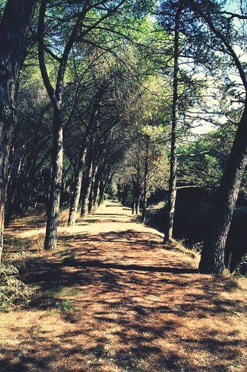 Sentier Nature First Eyeem Photo