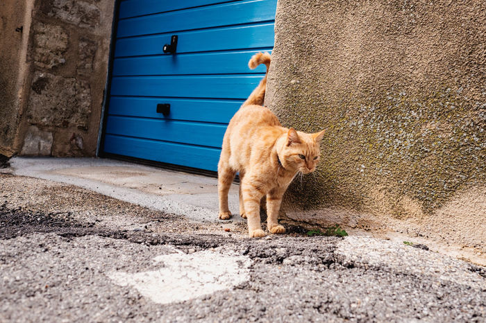 thanks to the cat to be in front of the blue door. I love this colors. Some more pictures from my trip in south france: http://andiweiland.de/frankreich-bonvoyage-teil-1/ Blue BonVoyage Cat Door Fujifilm One Animal Pets Provence Relaxing Street Whisker