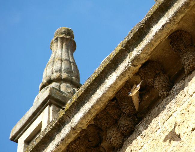 Nidos de golondrinas. Swallows' nests Nature Streamzoofamily EyeEm Nature Lover Somosfelices