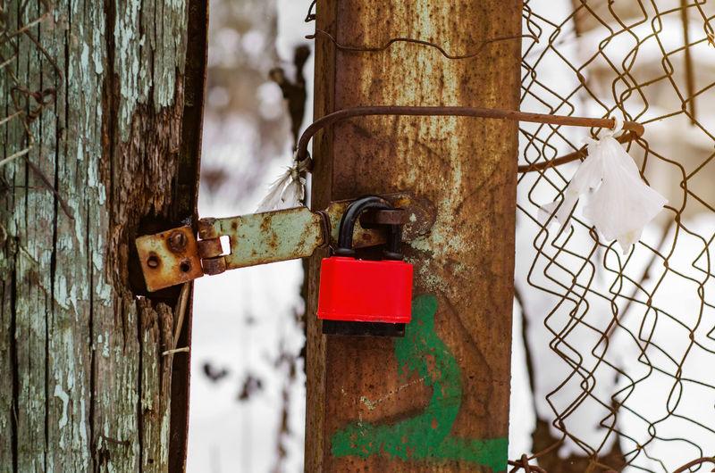 Close-up of padlock on tree trunk