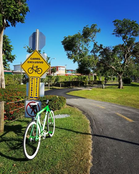 Tree Road Sign Bicycle Bicycle Lane Communication Guidance Sky Close-up