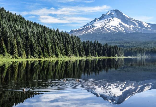 The beauty of Oregon's Mt. Hood Beauty Beauty In Nature Beauty In Nature Day EyeEm EyeEm Gallery EyeEm Nature Lover Lake Landscape Mt Hood Mt Hood Oregon Nature Tranquil Scene Tranquility Trillium Lake Oregonexplored