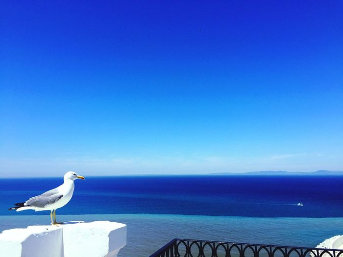 Seagull Perching On Pillar By Sea Against Blue Sky