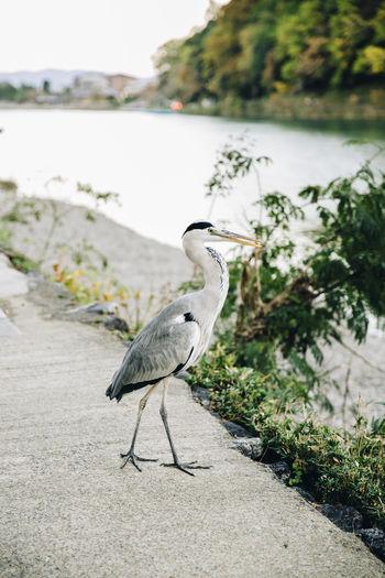 Bird in Japan