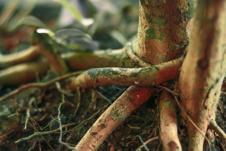 indonesia 2019 root of the shoot Root Roots Roots Of Tree Roots Of Life Plant Tree Growth Close-up Selective Focus Nature Focus On Foreground Tree Trunk Land Forest Outdoors Beauty In Nature Green Color Plant Part Tangled Indonesia Photography  Indonesia Photography  Indonesian ASIA Flora Flora Photography