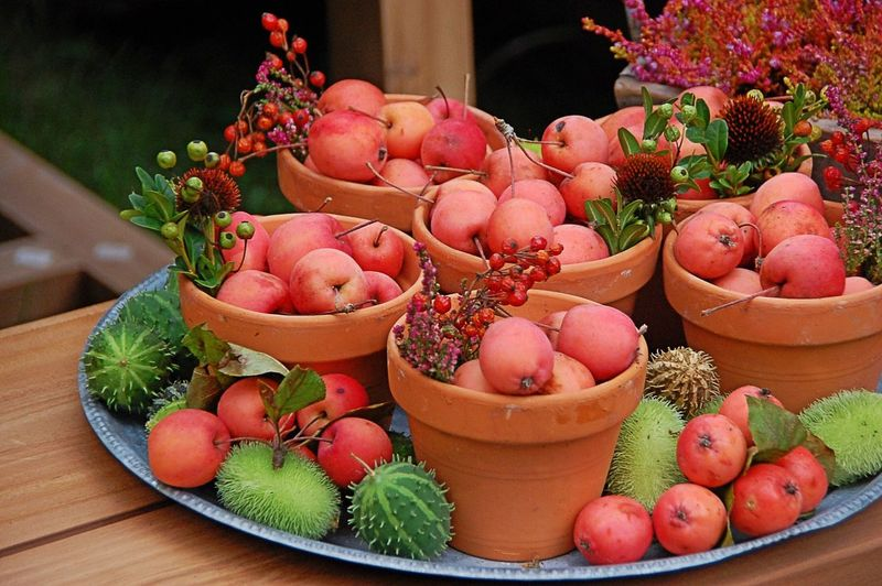 Natural decorations Fall Autumn Colors Decor Fall Decorations Autumn Lifestyles Lifestyle Living Colors Colorful Apple Red Apple Chestnut Red Green Flower Pot Tray Home Decor Home Decoration