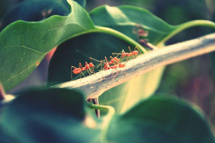 Ants Macro Photography My Clicks  Kerala Macro_collection Insect Photography Movingforward