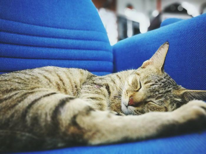 Close-Up Of Cat Sleeping On Sofa