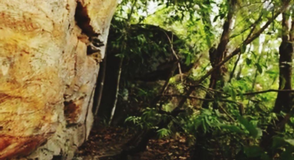 alam liar Backgroun Tree Thick Close-up Growing WoodLand Fungus Plant Bark Young Plant Fly Agaric Fly Agaric Mushroom Mushroom Toadstool Wild Edible Mushroom Forest Fallen Tree Fern Moss Woods Tree Trunk Lichen Bark