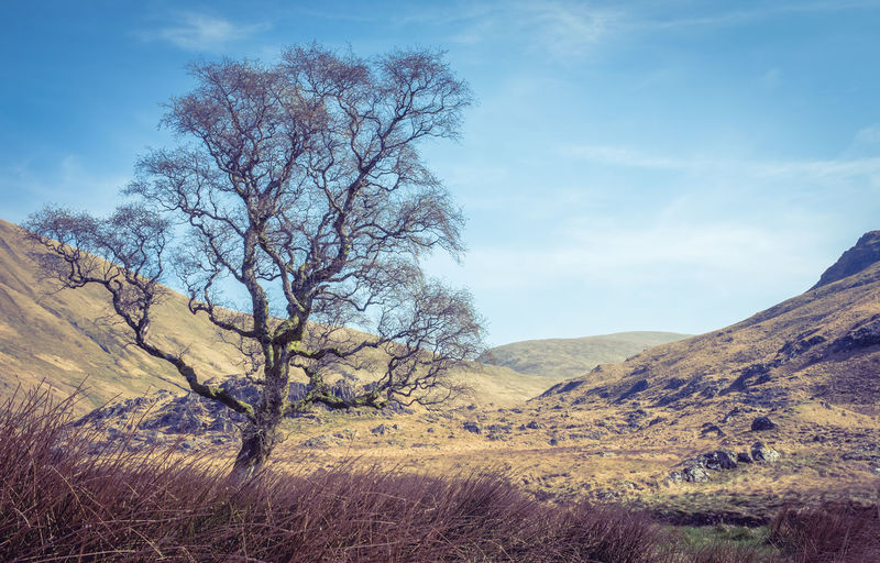 Barren Dry And Rocky Landscape Wilderness With A Single Tree In The Scottish Borders Tranquil Scene Beauty In Nature Scenics - Nature Landscape Environment Tree Sky Tranquility Cloud - Sky Nature Non-urban Scene No People Branch Outdoors Scotland 💕 Borders Scottish Borders Tree Isolation Dry Rocky Rugged Beauty