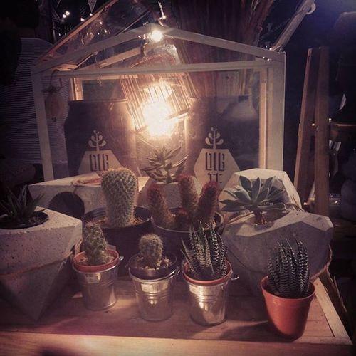 dibteยามค่ำคืน กระถาง กระถางกระบองเพชร กระถางปูนเปลือย กระถางปลูกต้นไม้ Dib_te DIY Design Lamp Livingplants Plants Plant Planter Plantes Secculent Secculentcafe S Sacculent Sale S Cactusthailand Cactusshop Cactusmagazine Cactus Cactuslover Cactuslovers cactusclubs loft rustic