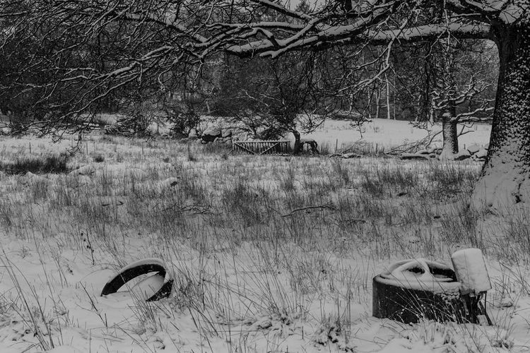 Waiting for spring. Sweden Skåne Landscape Winter Trees Snow
