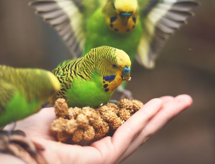 Cropped Image Of Hand Feeding Bird