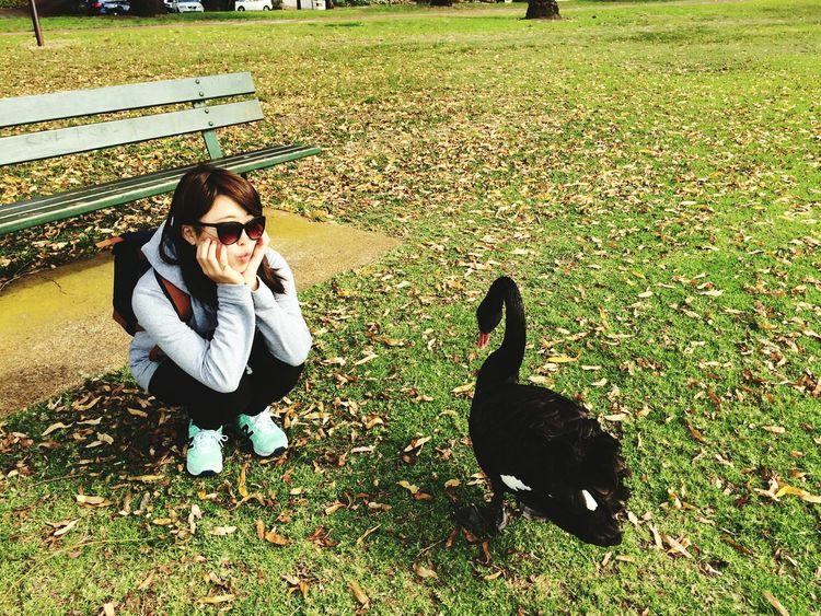 Hey! Are you looking at me? LakeMonger Leederville Perth Australia Winter BlackSwan