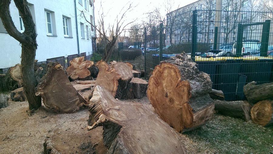 Holz Werkstatt?