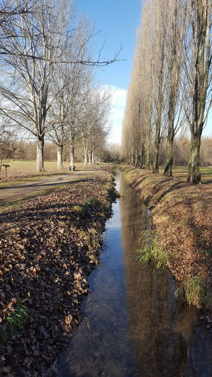parco centenario Puddle Nature Tranquility Day Tranquil Scene Autumn Beauty In Nature Reflection Outdoors Water Clear Sky